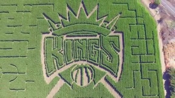 Grand Opening of Cool Patch Pumpkins Corn Maze