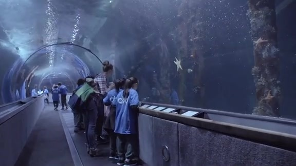 Learning without Limits at the Aquarium of the Bay